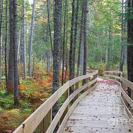 Mud Pond Trail - Pondicherry Wildlife Refuge, New Hampshire by Erin Paul Donovan