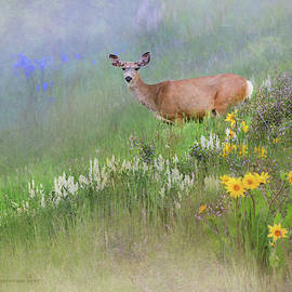 Mules Ears by R christopher Vest