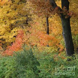 Multicolored Beauty by Ann Horn