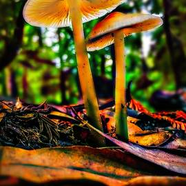Mushroom Forest by Christina Ford