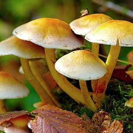 Mushrooms On The Forest Floor by Sharon Talson