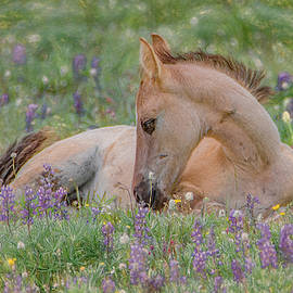 Wild Mustang Foal in the Wildflowers by Marcy Wielfaert