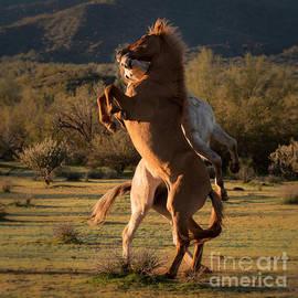 Mustang Spar by Lisa Manifold