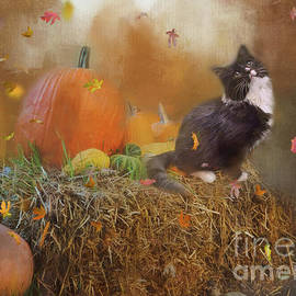 My Autumn Kitty by Kelley Freel-Ebner