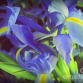 My Blue Irises by Dora Sofia Caputo Photographic Design and Fine Art