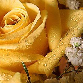 My Favorite Flower - 1 by Arlane Crump