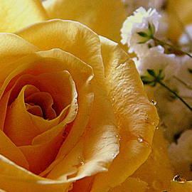 My Favorite Flower - 3 by Arlane Crump