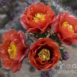 My Garden Of Joy Bouquet  by Janet Marie