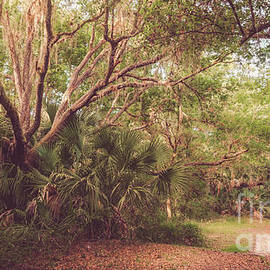 Myakkahatchee Creek Park, North Port, Florida by Liesl Walsh