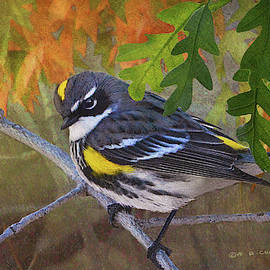 Myrtle Yellow-rumped Warbler by R christopher Vest
