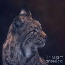 Mysterious Lynx by Flo Photography