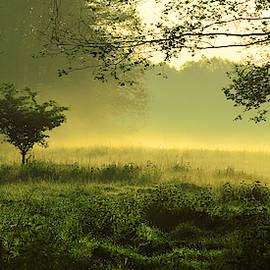 Mystic foggy landscape in the morning - Image  by Caids Ados