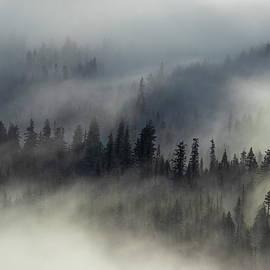 Lynn Hopwood - Mystical fog and trees
