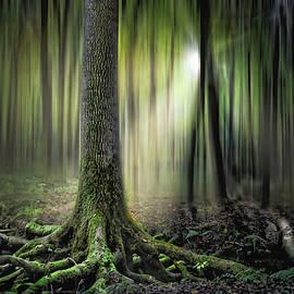 Nikola Nemet - Mystical Oak