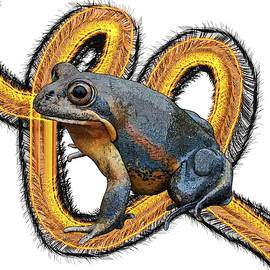 N is for Northern Banjo Frog by Joan Stratton