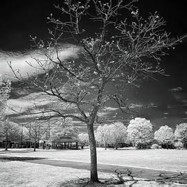 Naked Urban Tree by Norman Gabitzsch