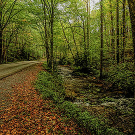 Nantahala Forest 2 by Judy Vincent