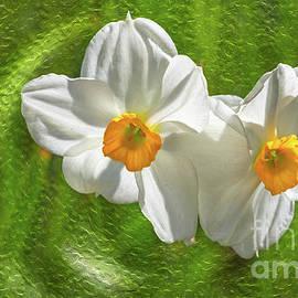 Narcissus flowers by Bernd Laeschke