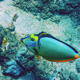 Naso Tang Cleaning by Anthony Jones