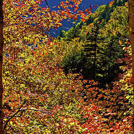 Natural Frame by Patti Whitten