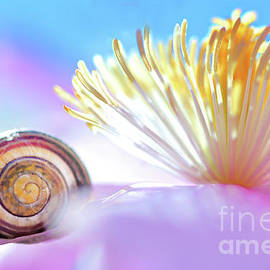 Nature symbol with Clematis flower by Gregory DUBUS
