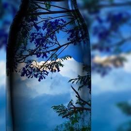 Nature Through Bottle  by Colette V Hera Guggenheim