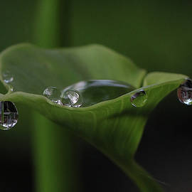 Nature's Droplets by Rebecca Finley