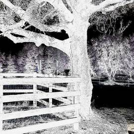 White and Black by Tara Farris