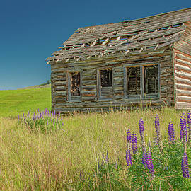 Neglected and Alone by Marcy Wielfaert