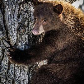Neighborhood Bear 3 by Webb Canepa