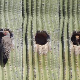 Nesting Woodpecker by Deliana Noel