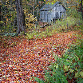 Bill Wakeley - New England Autumn Woods