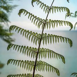 New Zealand Fern III by Joan Carroll