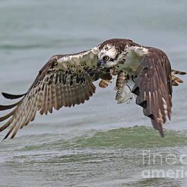 Nice Catch by Dale Erickson