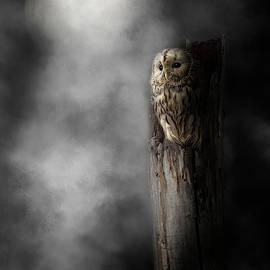 Night Owl 2019 by Bill Wakeley