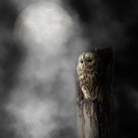Night Owl 2019 Square by Bill Wakeley
