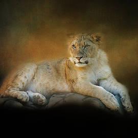 Night Watching by Terry Davis