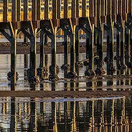 Nisqually Estuary Boardwalk Closeup by Marv Vandehey