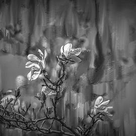 no rain no flowers BW #i6 by Leif Sohlman