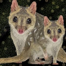 Northern Quoll Pair by Joan Stratton