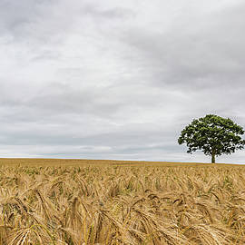 Oak And Barley by Nick Bywater