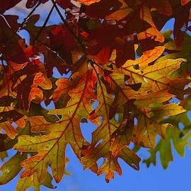 Photography by Tiwago - Oak Leaves #2