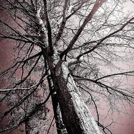 Oak Outreach by Christy Mandeville