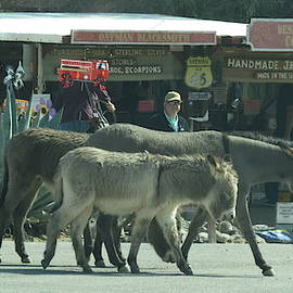 Oatman Arizona Burros 2 by Kay Novy