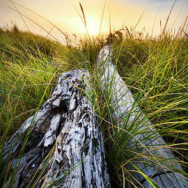 Ocean Driftwood by Debra and Dave Vanderlaan