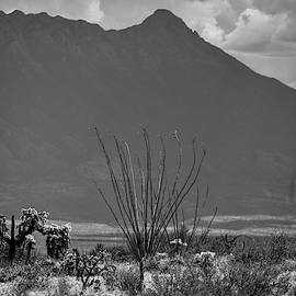 Ocotillo and Mount Wrightson Black and White  by Chance Kafka