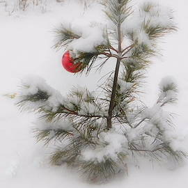 Karen Cook - Oh Christmas Tree