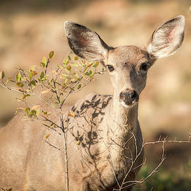 Oh Deer 01066 by Kristina Rinell