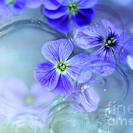 Oil and Water with flowers by Elaine Manley