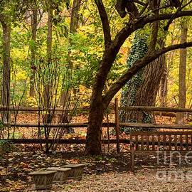 Old Bench in the Woods by Miriam Danar